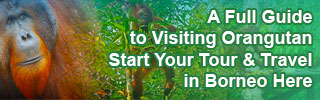 List of Orangutan Tour & Travel